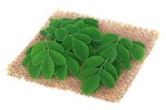 Edible moringa leaves on sack surface Royalty Free Stock Photo