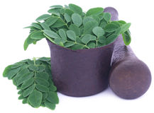 Edible moringa leaves in a vintage mortar Royalty Free Stock Images