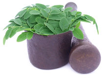 Edible moringa leaves in a vintage mortar Stock Photo
