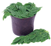 Edible moringa leaves in a vintage mortar Royalty Free Stock Photography