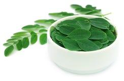 Edible moringa leaves Royalty Free Stock Image