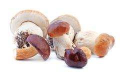 Edible mushroom - boletus Stock Images