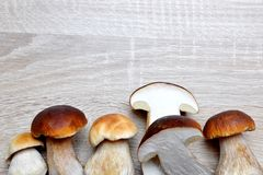 Edible mushroom Boletus. Edible mushroom Boletus on a wooden background Royalty Free Stock Images
