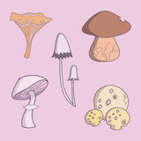 Edible Mushroom Collection on Pink Background. Common Fungi. Stock Photography