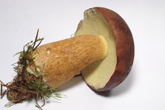 Edible mushroom Royalty Free Stock Photography