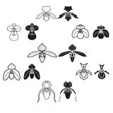 Orchid seven species vector icon in two stlye. Paphiopedilum flower vector icon seven species in two stlye black and white Royalty Free Stock Images