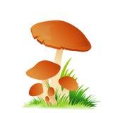 Edible mushroom porcini with grass on white Royalty Free Stock Photos
