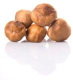 Edible Mushroom VIII Stock Image
