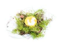 Edible mushroom on white background autumn Stock Image