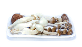 Mushroom in foam package with plastic wrap Royalty Free Stock Images