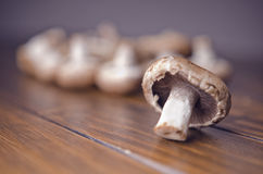 Edible mushroom Royalty Free Stock Image
