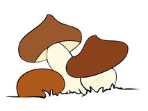 Edible mushrooms. Stock Photos
