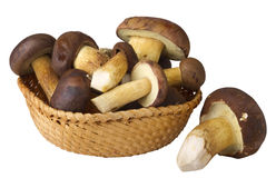 Edible mushrooms Royalty Free Stock Image