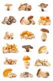 Edible mushrooms Stock Images