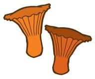 Edible mushrooms autumn Stock Photography