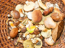 Edible mushrooms in the basket Royalty Free Stock Images
