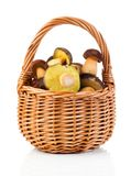 Edible mushrooms in a basket Stock Photography