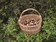 Edible mushrooms Royalty Free Stock Photography