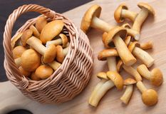 Edible mushrooms. Royalty Free Stock Images