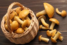 Edible mushrooms. Stock Image