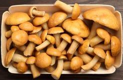 Edible mushrooms. Edible bovine bolete mushrooms on a wooden background Stock Photo
