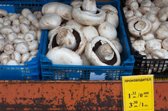 Edible mushrooms in a box on the market. Stock Image