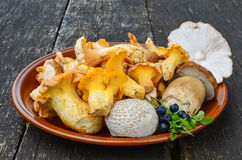 Edible mushrooms. Chanterelles, Cep, Blusher and Puffball and some blueberries  in rustic, ceramic  plate on old oak table Stock Photo