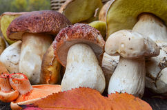 Edible mushrooms close up Stock Images