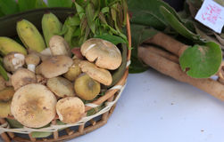 Edible mushrooms Royalty Free Stock Images