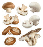 Edible mushrooms. 3d vector icons set Royalty Free Stock Photography