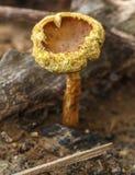 Edible mushrooms Royalty Free Stock Image