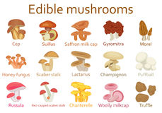 Edible mushrooms flat icon set Stock Image