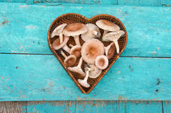 Edible mushrooms fungi in heart form wicker basket Royalty Free Stock Photography