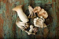 Edible mushrooms on grunge table Royalty Free Stock Images