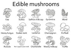 Edible mushrooms icons set Stock Photography