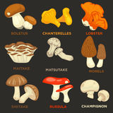 Edible Mushrooms Isolated Flat Vector Icons Set Royalty Free Stock Photography