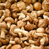Edible mushrooms on the market Stock Photos