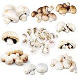 Edible Mushrooms Royalty Free Stock Photos