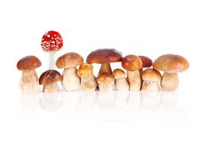 Edible mushrooms and one red poison mushroom stock photo