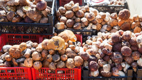 Edible mushrooms ready for sale at the local market Stock Photos