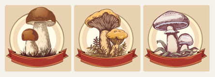 Edible mushrooms. A series of  illustrations of edible mushrooms. Good to use as a label. No gradient mesh and other effects Stock Images