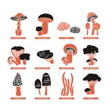Edible Mushrooms Set Royalty Free Stock Image