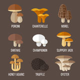 Edible mushrooms. Vector set of different kinds of edible mushrooms. Flat style Royalty Free Stock Images