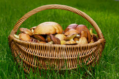 The edible mushrooms royalty free stock photography
