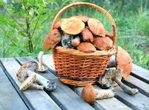 Edible mushrooms on a wooden table closeup Stock Images