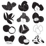 Edible Nuts Collection. Edible Nuts in black and white Royalty Free Stock Image