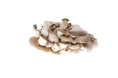 Edible oyster mushrooms on  white background Stock Photos