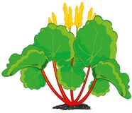Edible plant rhubarb on white background is insulated. Vector illustration of the decorative edible plant rhubarb stock illustration
