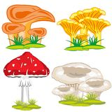 Edible and poisonous mushroom. Mushrooms edible and poisonous on white background is insulated Stock Image