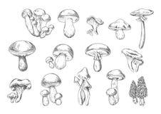 Edible and poisonous wild mushrooms, sketch style. Forest mushrooms sketch of edible chanterelle, king bolete, honey agaric, portobello, porcini, morel, cep and Royalty Free Stock Photography